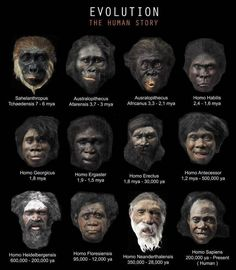 """Evolution is fact. Creationism is denial of the facts? So these paintings of fictions """"transitional' humans are proof of what exactly? DNA has determined ape bones are ape and human bones are human. Pseudo Science, Science And Nature, Anthropologie, Homo Habilis, Human Evolution, Evolution Science, Hair Evolution, Early Humans, World History"""