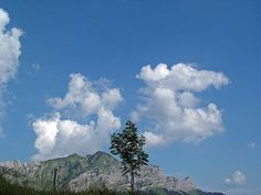 Mountains and tree by *_*, via Flickr