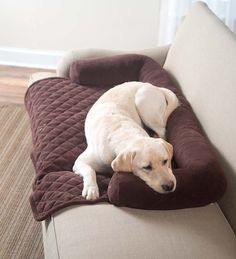 Protect Your Furniture And Give Your Furry Friend A Spot On The Sofa :) | · Furniture  CoversPet ...
