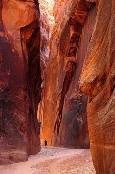Buckskin Gulch is known as the longest slot canyon in the world. With amazing colors and narrow canyon walls soaring over 400 feet, this is a amazing hike! Beautiful Photos Of Nature, Nature Pictures, Beautiful Places, Amazing Nature, Amazing Places, Pinup Art, Zermatt, Paria Canyon, Antelope Canyon