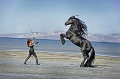 Awesome Friesian photo from Royal Carousel Friesians in Utah. http://www.royalcarouselfriesians.com