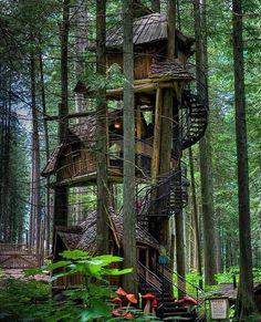 Tree House in British Columbia, Canada