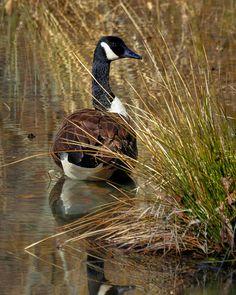 Canada Goose trillium parka sale shop - Lady in Waiting , Canada Goose by ~Blackjaxe on deviantART ...