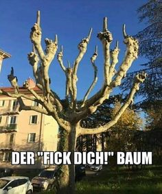 Mein Lieblingsbaum Funny Tweets, Funny Jokes, Hilarious, Funny Images, Funny Pictures, Garden Quotes, Humor Grafico, Tumblr, Kids Pranks