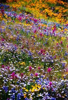Wild meadow flowers.