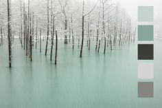 ~ Color inspiration《Snow Forest》~