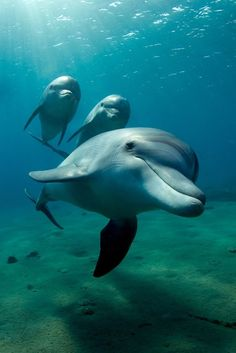 Dolphins are one of the most intelligent mammals pn the planet. And they communicate with sonar. How cool is that?