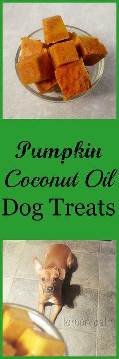 Happy 2nd Birthday Macy! + Pumpkin Coconut Oil Dog Treats http://macthelm.blogspot.com/ Three ingredient no-bake dog treats that are chock-full of nutrition!