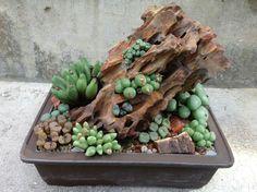 Ken Uy, Conophytum rock after rain