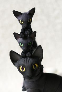 Russian bjd cats - ok, i am not sure what other category to put them in, even though they aren't humanoid, which was my main goal for this folder.... oh well.