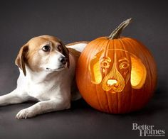 Beagle Pumpkin:        Lucy is a beagle-terrier mix with a love for little kids, their sticky fingers, and their leftover snacks. Diet? Now, seriously. Who can manage to put a beagle on a diet? Especially with those big, beautiful brown eyes begging for more.        -- Stacey Willey, Lucy's owner