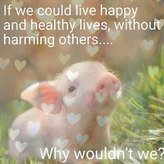 If we could live happy and healthy lives, without harming others...why wouldn't we? #VEGAN