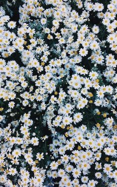 grafika flowers, daisy, and wallpaper Iphone Hintegründe, Apple Iphone, Aesthetic Wallpapers, Cute Wallpapers, Pretty Pictures, Pretty Images, Mother Nature, Planting Flowers, Flowers Garden