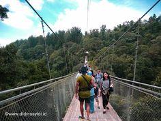 Sensasi Mantul-Mantul di Suspension Bridge Situ Gunung Sukabumi, Well Done ! Sukabumi, Suspension Bridge, Board, Planks