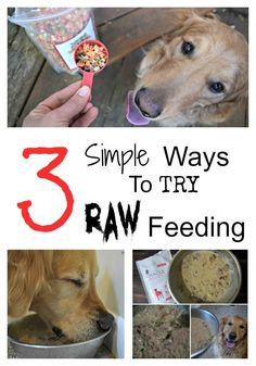 Love the idea of feeding raw, but not sure you have the time/knowledge to do it properly? @drharvey has taken the guess work out of feeding raw with wholesome dog food and supplements! Check out @MyDogLikes ' full review to see how easy it can be!