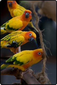Parakeets-love their colors