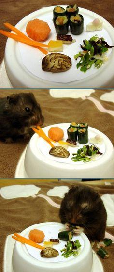 Hamster sushi!