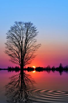 ✯ The Tree of Life