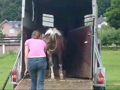 Unsere Ponyfamilie wird verladen Animals, Head Stand, Simple Bun, Animales, Animaux, Animais, Animal