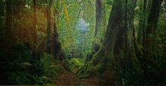Ancient Rainforest (very small edition 100) by Peter Lik, Limited Edition Print, Ilfochrome Photograph Print