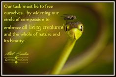Our task must be to free ourselves by widening our circle of compassion to embrace all living creatures and the whole of nature and its beauty N Animals, Nature Animals, Image Form, Save Our Earth, Life Matters, Nature Quotes, Faith In Humanity, Animal Rights, What Is Life About