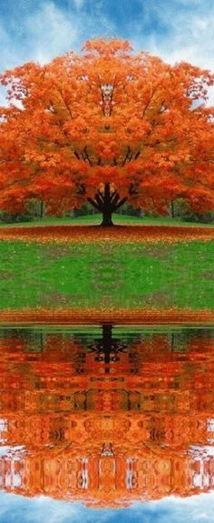 Gorgeous sugar maple tree and reflection;  just beautiful