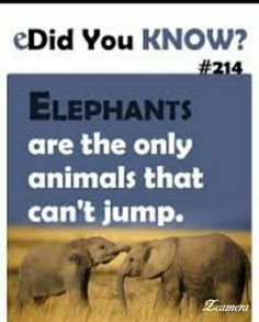 17 Best Did You Know Quotes Images Crazy Facts Did You Know Fun