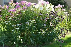 Big bed in front yard--August.