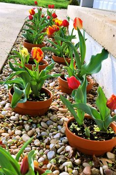 My husband dreamed this one up.  He broke the bottom out of ceramic pots planted tulip bulbs then in the summer we plant something else on top.  Easy and clean to maintain in the Garden or like us along our front porch!