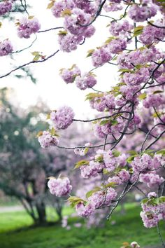 ♕ beautiful spring blossoms