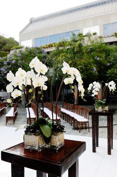 Potted orchid centerpieces. Love it. This is exactly what I envisioned for the next event I am planning. A Celebration of Life.
