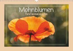 Mohnblumen – Pure Faszination in Rot - CALVENDO