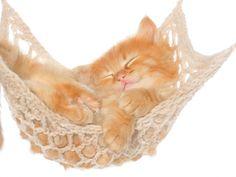 sleeping #cate
