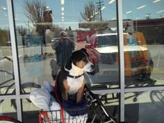 PT BOISE IDAHO. COLLISTER CENTER, APR 15. DOG IN A BICYCLE BASKET.