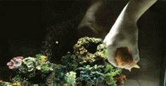 That Was Awesome, Let's Do It Again!! #GIF #Fishy