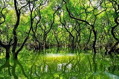 ratargul,the floating forest