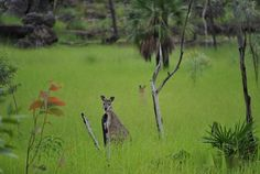 Australia Darwin | Darwin-AUSTRALIA | Darwin