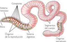 Micro Garden, Image Search, Snake, Animals, Tamales, Reggio Emilia, Study Motivation, Bts Jungkook, Montessori