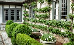 """Espalier is French but is derived from the Italian word for """"support"""", """"or rest shoulder against"""". Espalier is art of pruning and training . Garden Landscape Design, Landscape Architecture, Garden Landscaping, Architecture Design, Formal Gardens, Outdoor Gardens, Fresco, Garden Structures, Outdoor Structures"""