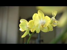 How to Grow Orchids Indoors | At Home With P. Allen Smith