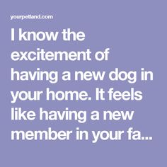 I know the excitement of having a new dog in your home. It feels like having a new member in your family. Of course, you want your dog to be your best friend and you want to ensure the safety of your dog.