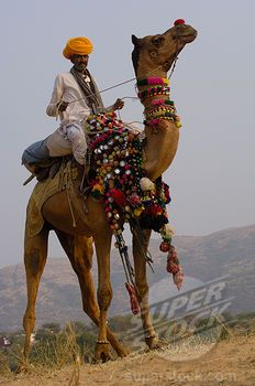 Pushkar Fair, Rajasthan