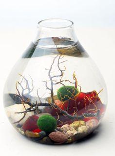 Marimo Terrarium - Japanese Moss Ball Aquarium- Teardrop Vase - Sea Fan - Red Sea Glass - Living Home Decor - Green Gift