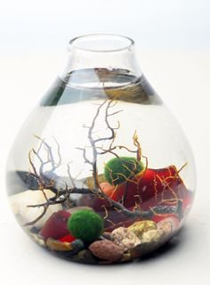 Marimo Terrarium - Japanese Moss Ball Aquarium- Teardrop Vase - Sea Fan - Red…