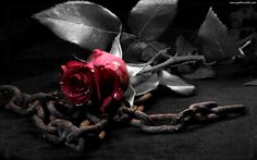 Gothic chains dark metal roses Free HQ and widescreen wallpapers Gothic Wallpaper, Rose Wallpaper, Wallpaper Backgrounds, White Backgrounds, Wallpaper Gallery, Wallpaper Ideas, Photo Wallpaper, Black And White Wallpaper Iphone, White Iphone