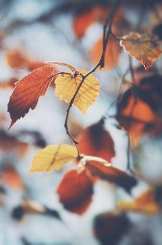 autumncozy.tumblr.com