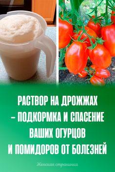 Cantaloupe, Fruit, Vegetables, Garden, Food, Garten, Lawn And Garden, Essen, Vegetable Recipes