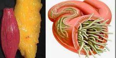 Cómo eliminar la grasa y los parásitos con las semillas de lino