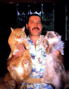 Freddie Mercury , Lover Of Life , Singer Of Songs, Owner of Cats