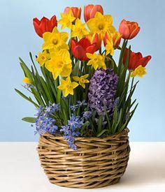 Tulips, jonquil, hyacinth, scilia and muscari.